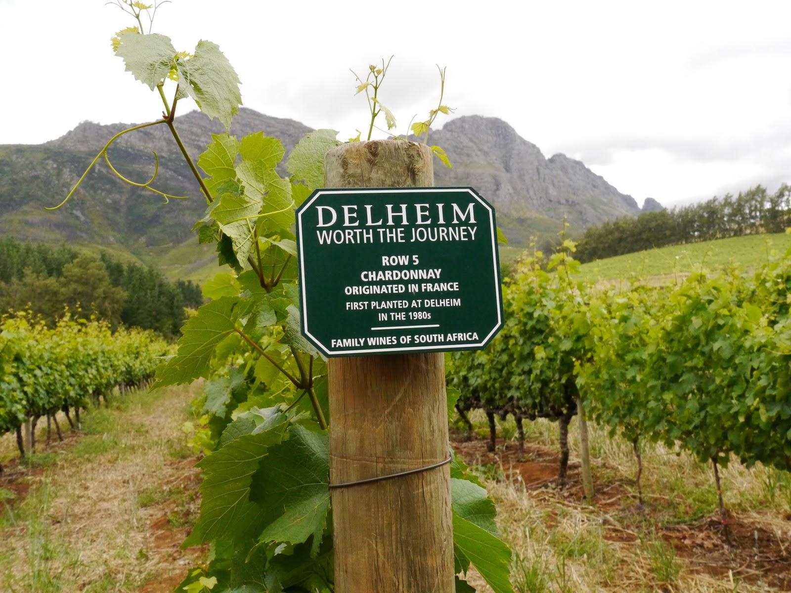 Delheim Weinverkostung Stellenbosch