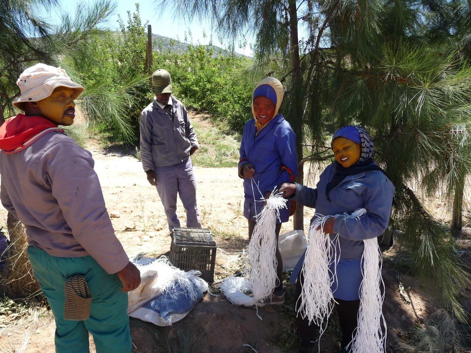Wineland Western Cape Südafrika Obstanbau